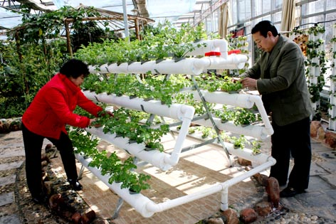 阳台菜园_阳台菜园设计_学生菜园的班牌手抄报_中国排行网